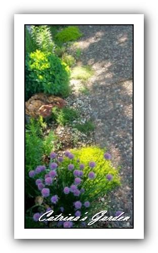 Catrinas-Herb-Garden-159x300