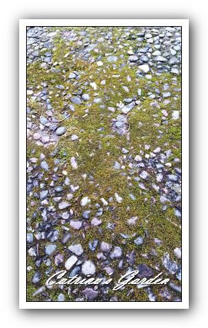Moss (5)1