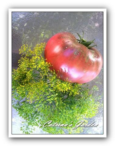 Tomato (10)1
