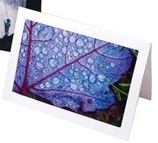 frame-cards